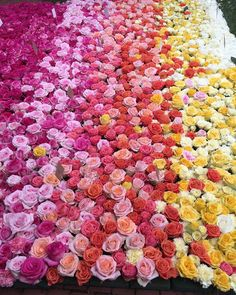 Now that's a bed of roses!! #perfumed @sagharborflorist