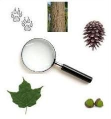 Camping with Kids - This website is aweseome! Full of all things camping; from survival, knot tying, first aid, camping games, camping gifts and checklist. Girl Scout Camping, Camping Games, Camping Glamping, Camping Theme, Camping Activities, Camping And Hiking, Camping With Kids, Camping Survival, Camping Life