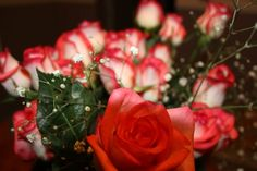 Rose, Flowers, Plants, Photography, Fotografie, Floral, Photography Business, Roses, Photo Shoot