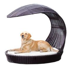 The Refined Canine Outdoor Dog Chaise Lounge | Wayfair Enjoy your time in the sun while your dog relaxes in the shade. The Outdoor Dog Chaise Lounge is a stylish dog bed that perfect for any deck or poolside patio.
