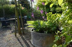 Spiegel Tuin Intratuin : Beste afbeeldingen van de tuin van intratuin s gravenzande
