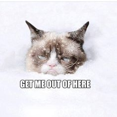 The adorable feline who has the face of an unhappy math teacher -- forty of the cutest Grumpy Cat pictures ever! Funny Shit, Funny Cats, Funny Animals, Cute Animals, Funny Stuff, Cat Stuff, Animal Funnies, Funniest Animals, Crazy Animals
