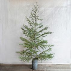 Fresh Cut Subalpine Fir