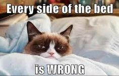 Grumpy Cat in waking up on the wrong side of the bed