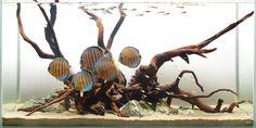 Aquarium Design Group - A Wild Discus Hardscape