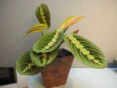 Grønn trend med planter til interiør som også gir renere luft