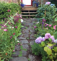 Nicotiana path to side door, rocks collected from the beach
