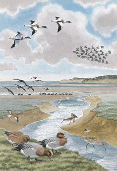 British Wildlife, Wildlife Art, Animal Paintings, Bird Paintings, Ladybird Books, Classic Paintings, Landscape Drawings, Bird Art, Illustration Art