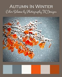 Winter Blues. Winter colors. Winter color pallets.   Plan your perfect winter event at www.Jellifi.com