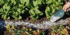 Gardening Tips, Herbs, Vegetables, Plants, Gardening, Stuff Stuff, Planting Vegetables, Herb, Vegetable Recipes