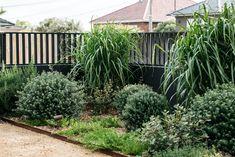Dover Heights Australian Garden Design, Australian Native Garden, Contemporary Garden Design, Beach Gardens, Outdoor Gardens, Backyard Pool Designs, Backyard Ideas, Garden Ideas, Pool Ideas