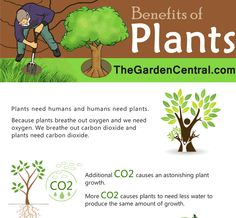 Benefits of Plants (Infographic)