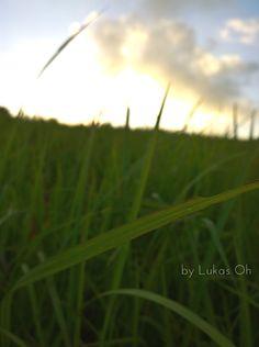 Ubud Campuhan Hill