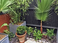 Last week, I was asked to create and work on a number of small garden spaces. In Ridley Avenue, Northfields, I was asked to bring a touch of the exotic to Small Space Gardening, Garden Spaces, Garden Solutions, Gardening Services, Tropical Gardens, West London, Summer Garden, Raised Garden Beds, Garden Inspiration