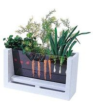Watch your veggies grow! Love this