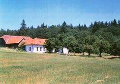 DDM Pelhřimov Trunks, Plants, Drift Wood, Planters, Plant, Planting