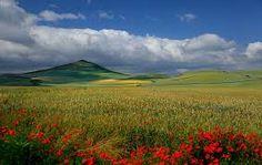 paisajes de flores naturales - Buscar con Google