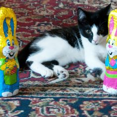 Smarty The Easter Kitty Kitty, Easter, Cats, Animals, Little Kitty, Gatos, Animales, Animaux, Kitty Cats