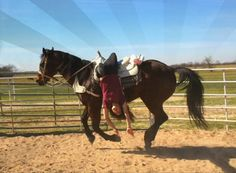 Lindsay George Byers, first time doing the suicide drag! (on Hippie). English Horses, Trick Riding, Dream Stables, Barrel Racing, Vaulting, Saddles, Horse Riding, Beautiful Horses, Rodeo