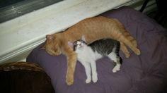 Itty Bitty Betty looks like one happy kitty, all snuggled up with Baby~Boo