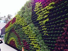 Green wall mexico