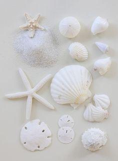 Poster Print Wall Art Print entitled White shells, starfish and sand dollars All White, Pure White, White Sea, Cream White, White Light, Shades Of White, White Aesthetic, Aesthetic Light, Simple Aesthetic