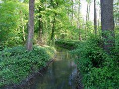 Der Bach. Die Bäche.  Dieser Bach fließt durch einen Wald. Er macht hier eine Biegung (eine Art Kurve).