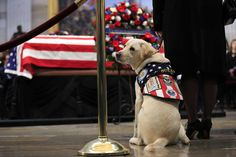 FOX NEWS: George H.W. Bush's casket visited by service dog Sully in Capitol Rotunda