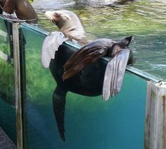 A Seal just Hanging Around at Central Park Zoo!
