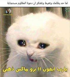 Funny Qoutes, Arabic Funny, Emoji Wallpaper, Photos, Cats, Hijab Fashion, Animals, House, Ideas