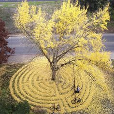 Every Year This University Employee Rakes Leaves Into Stunning Works Of Art And Leaves It For Students To Find