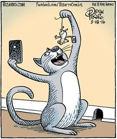 Bizarro - Funny Selfies - Funny Selfies images - - Bizarro The post Bizarro appeared first on Gag Dad. Cat Jokes, Funny Cat Memes, Funny Cartoons, Funny Comics, Funny Cats, Funny Animals, Hilarious, Crazy Cat Lady, Crazy Cats