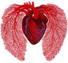 Realista bordado de pulmones y corazón de algodón (Andrea Dezsö)