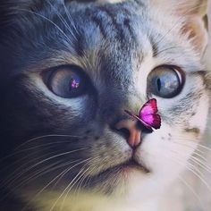 Cute Cat 😻 uploaded by Naina on We Heart It Cute Baby Cats, Cute Cats And Dogs, Cute Cats And Kittens, Cute Funny Animals, Cute Baby Animals, I Love Cats, Cool Cats, Kittens Cutest, Cute Animals Images