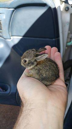 So Cute Baby, Cute Baby Bunnies, Baby Animals Super Cute, Cute Little Animals, Cute Funny Animals, Cute Babies, Cutest Animals, Tiny Baby Animals, Wild Animals