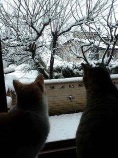 Bella la neve!