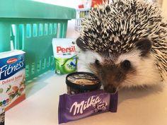 #hedgehog #animals