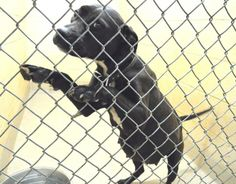 PLEASE help save Apple and her newborn pups!! Her Fundrazr is pretty empty and so far there have been no fosters either!  http://www.youcaring.com/pet-expenses/please-help-save-apple-and-her-newborn-pups-/144451 Cleveland County Animal Control 1609 Airport Rd, Shelby, NC 28150 https://www.facebook.com/photo.php?fbid=646153918753120&set=a.637867812915064.1073742132.285283128173536&type=3&theater