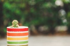 cactus in pot on bokeh background