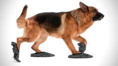 Met de Pet Sweep dweilt je hond de vloer