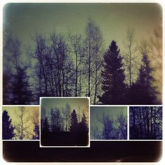 Great use of the collage feature in Pixlr Express is today's Pic of the Day. Silhouetted trees almost always make for a good photo, an. Free Photos, Cool Photos, My Photos, Digital Collage, Digital Art, Today Pictures, Computer Art, Tree Silhouette, Media Images