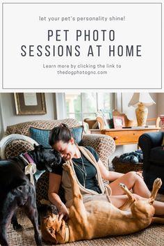 pet photo session, pet photo shoot, pet photo shoot ideas dogs, pet photo shoot ideas