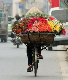 Flores, colores, Vie
