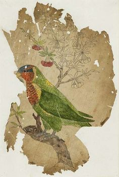 Unknown (India) Parrot 19th century