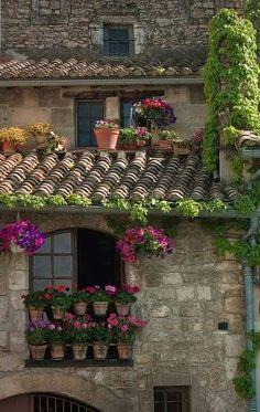 ღღ Someone that love plants like I do. you always find a nice spot to showcase them. ~ BBK