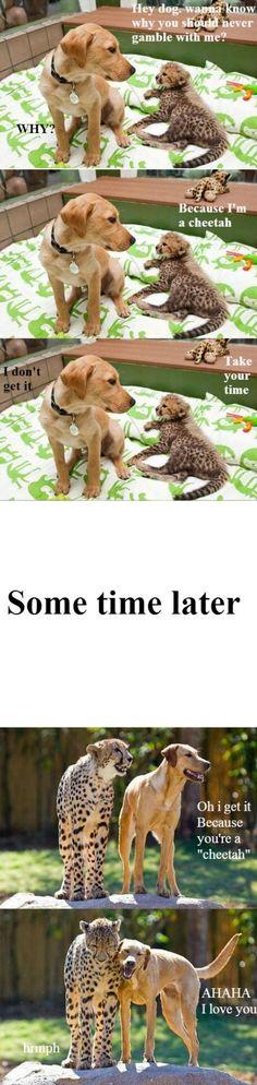 Eine tolle Freundschaft zwischen Katze und Hund. Auch wenn die Katze im Verhältnis etwas groß geraten ist. :-) mehr Katzenbilder: http//:www.tigressart.com #katzenbilder #katze #tiger