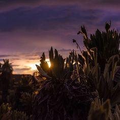 Amanecer y frailejones - Páramo del sol - Antioquia. . #paramodelsol #antioquia #nature #landscape #landscapephotography #sunrise #sunrisephotography #ig_sunrise #gramslayers #exceptional_pictures #sunrise_and_sunsets #skyporn #landscape_captures #earth_shotz #natgeoyourshot #yourshotphotographer #yourshot #explore #getlost #mountain #worldbestgram #thegreatoutdoors #pixphotos_ #thebest_capture #awesome_earthpix #frailejon