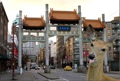 DowntownDeer says Chinatown, any good dim sum spots? A Little help #Vancouver