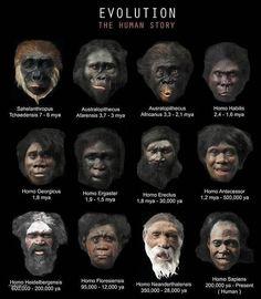 Carte de l'évolution des espèces - Nonverbal.Expert