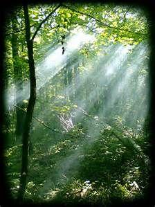 elven forest - Bing images